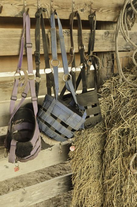 Feed bags of canvas and leather in horse stable