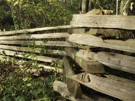 Split rail fence in woods