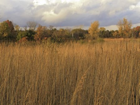 Prairie landscape at sunset in fall, with rain clouds moving in beyond horizon of woods, northern Illinois