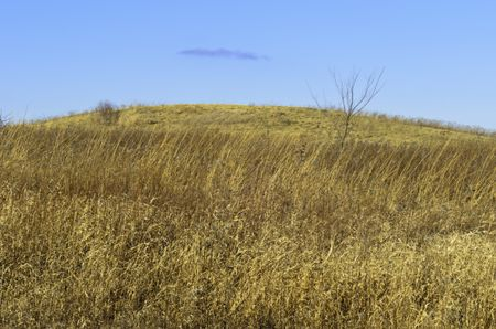 Prairie landscape in winter: Hill above dormant tallgrass and other wild plants at Danada Forest Preserve, Wheaton, Illinois, USA, on a January day without snow