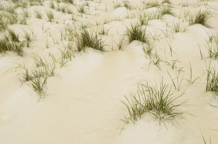 Tufts of dune grass by the Atlantic shore in Back Bay National Wildlife Refuge, Virginia Beach, Virginia