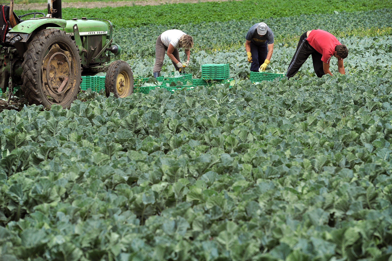 Apoio a Jovens Agricultores
