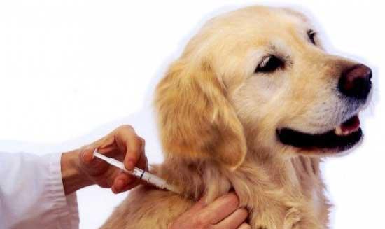 Veja o Calendário de Vacinação Anti-rábica