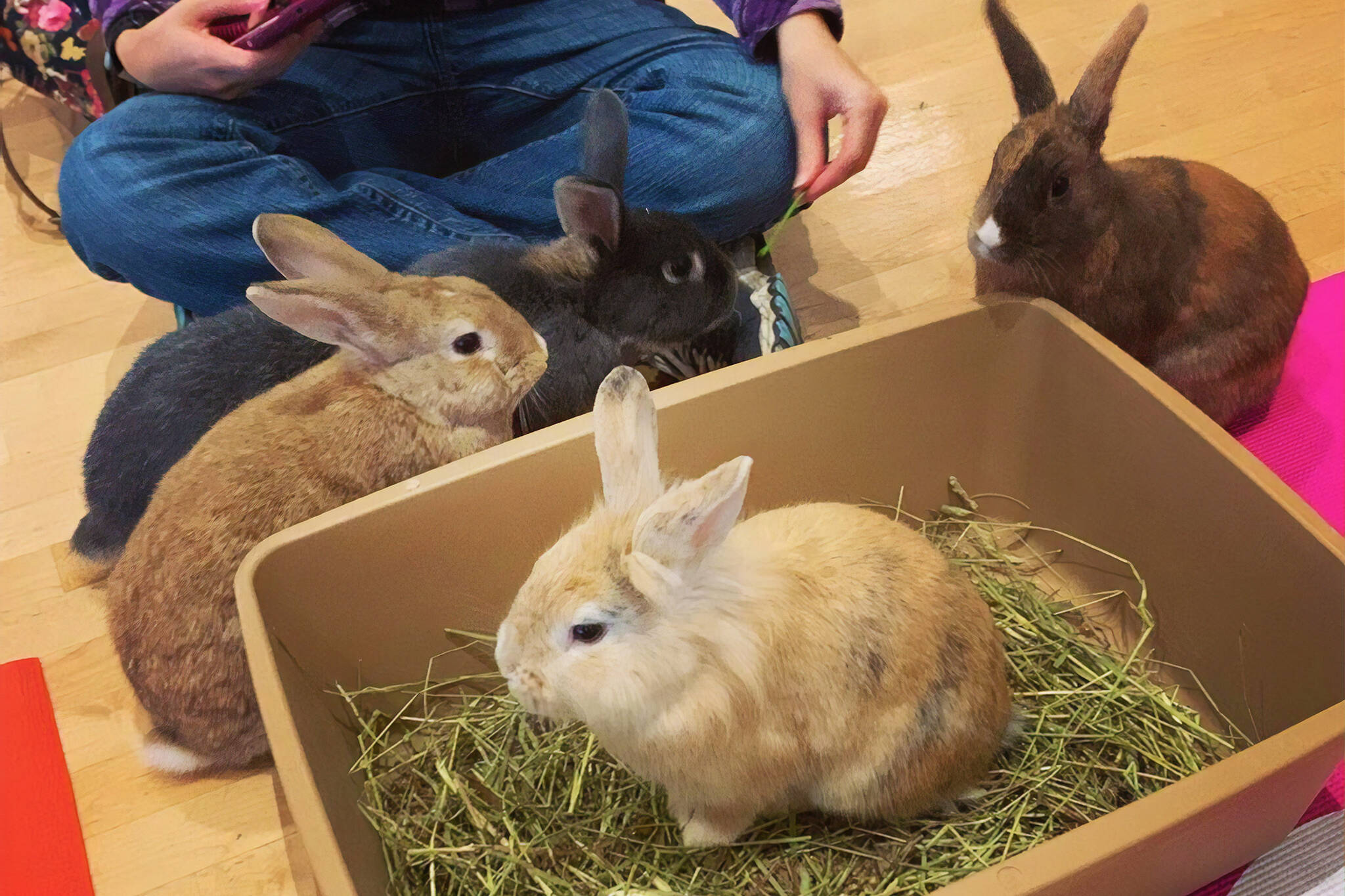 bunny cafe vancouver