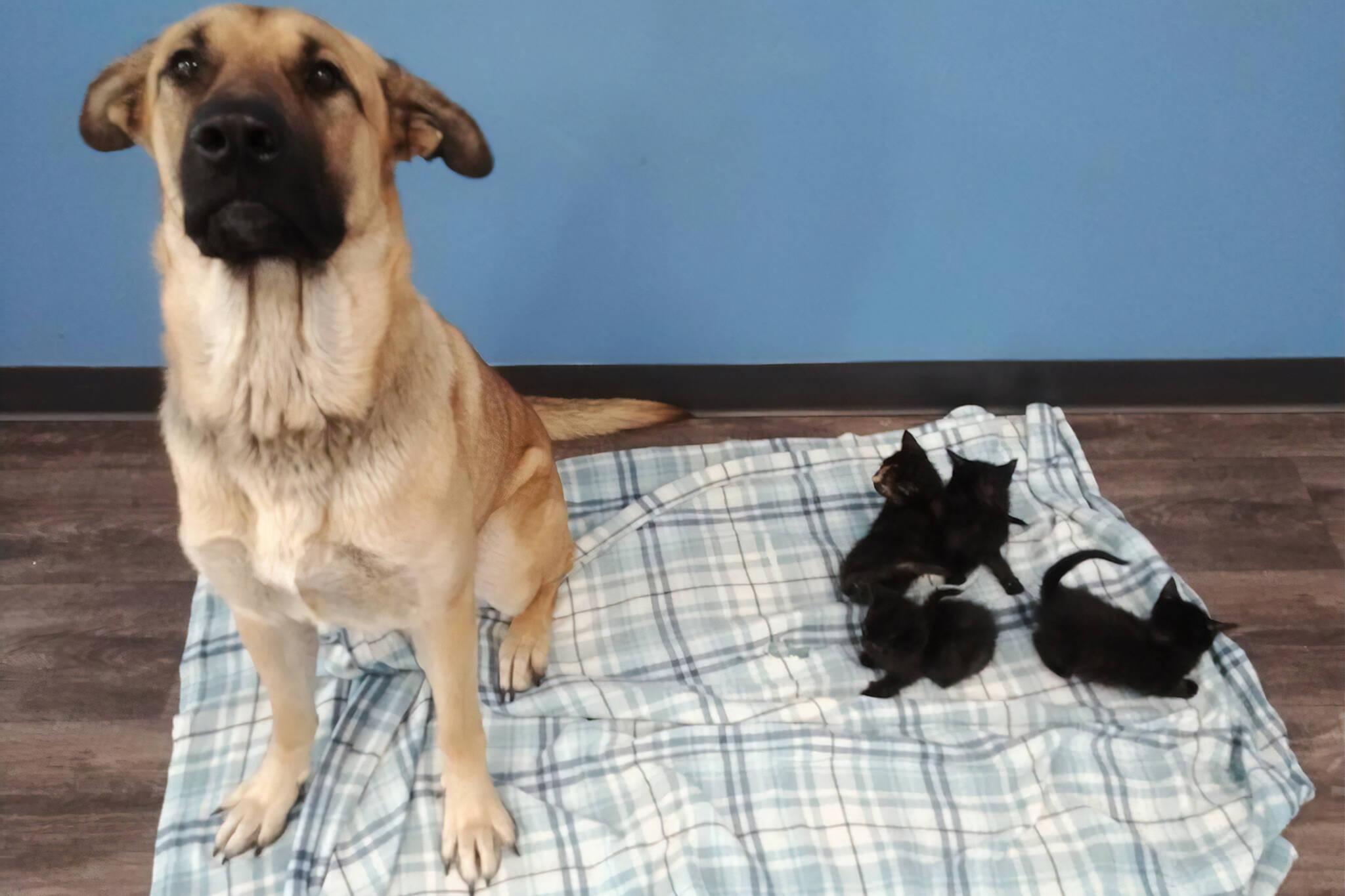 stray dog cuddles kittens