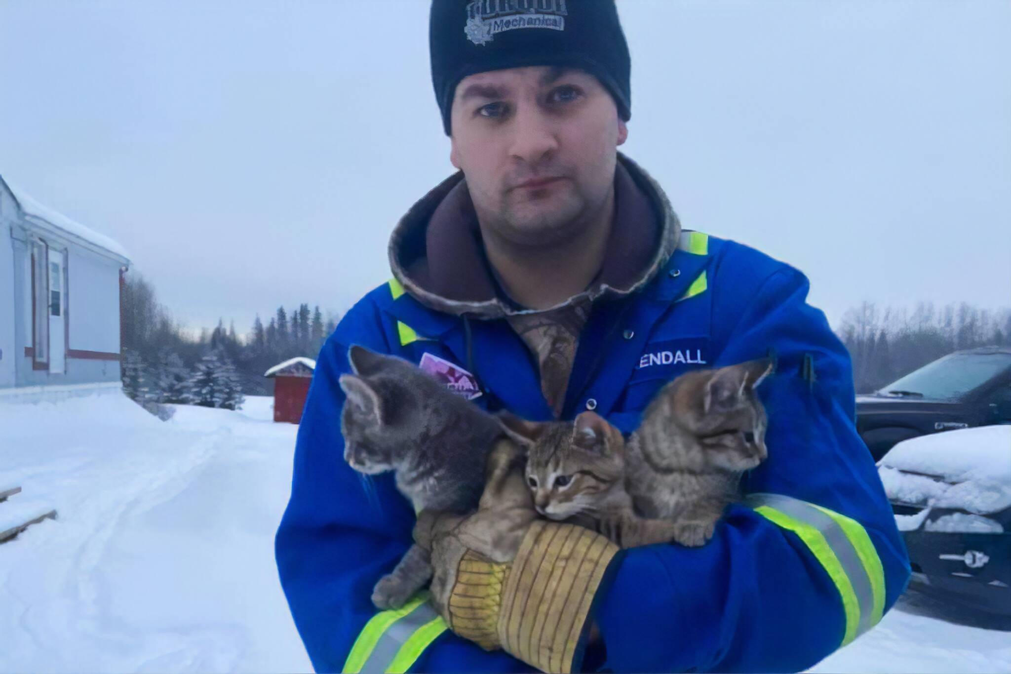 canada kitten rescue