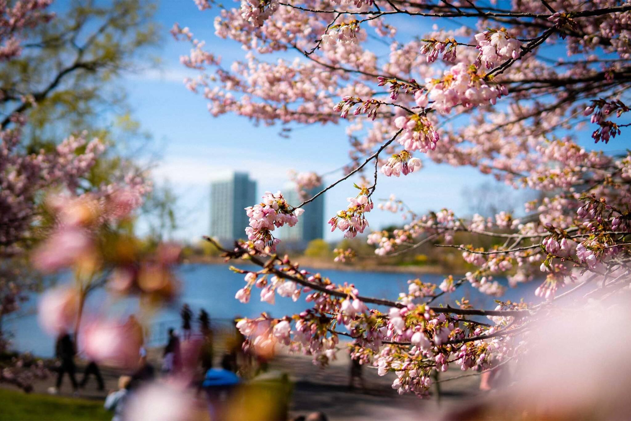 spring forecast 2020 Canada