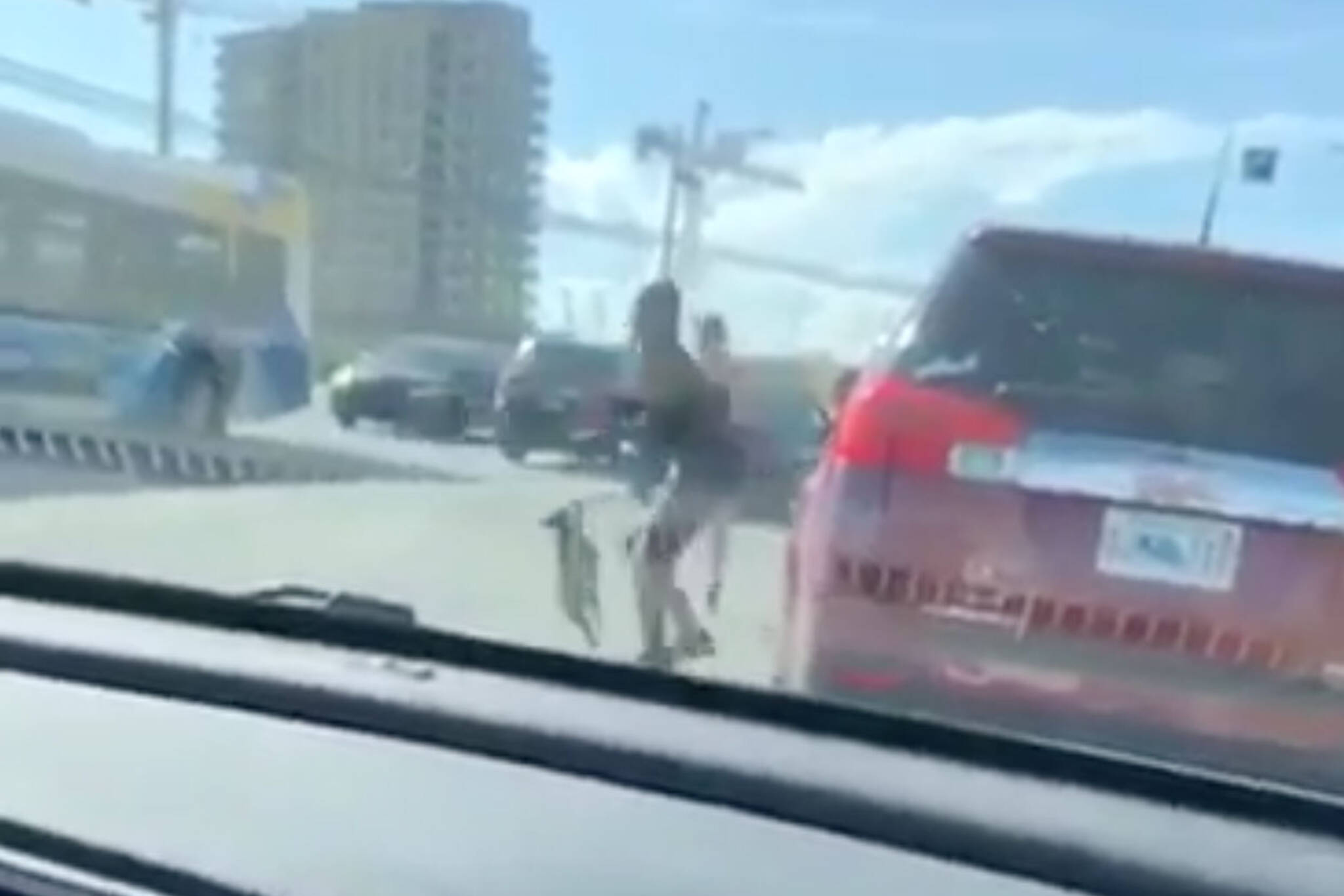Halifax Police investigating road rage incident involving dog ...