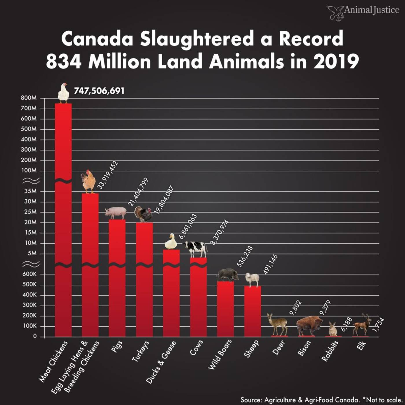 animal rights in canada