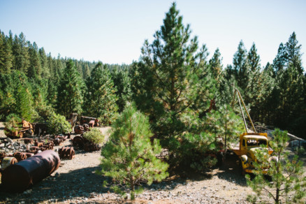 Woodsy Love Goldmine – Photo by Let's Frolic Together