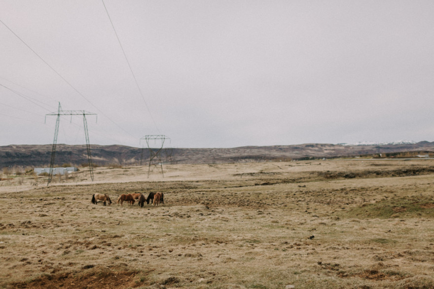 Iceland Tour: Vik, Horses, & The Blue Lagoon – Photo by Let's Frolic Together