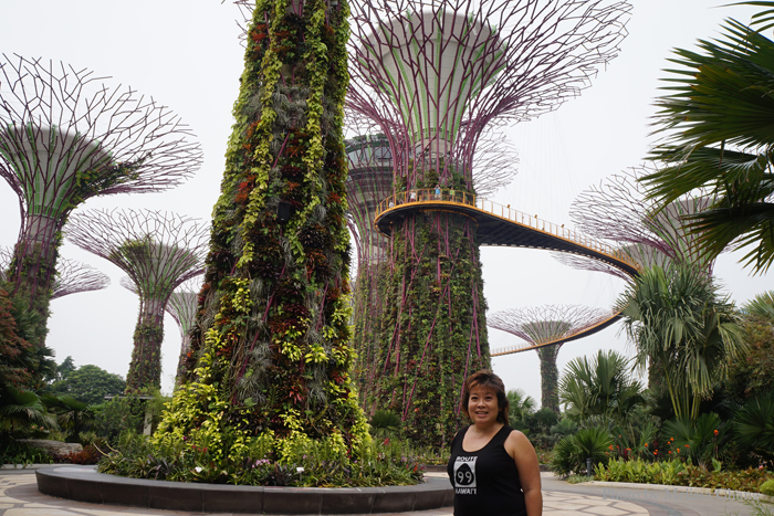 The Supertree Grove at the Gardens by the Bay, the most visible and photographed part of the attraction.