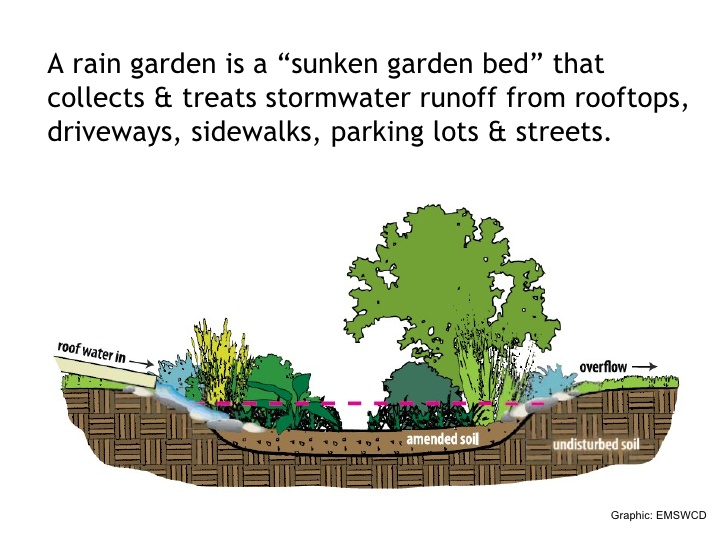 A rain garden is a sunked garden bed that collects and treats stormwater runoff from rooftops, driveways, sidewalks, parking lots, and streets.