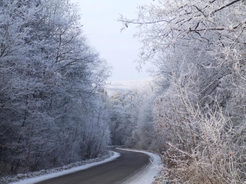 Sow Now, Reap Later – Ten Winter Tasks to get a Start on Spring