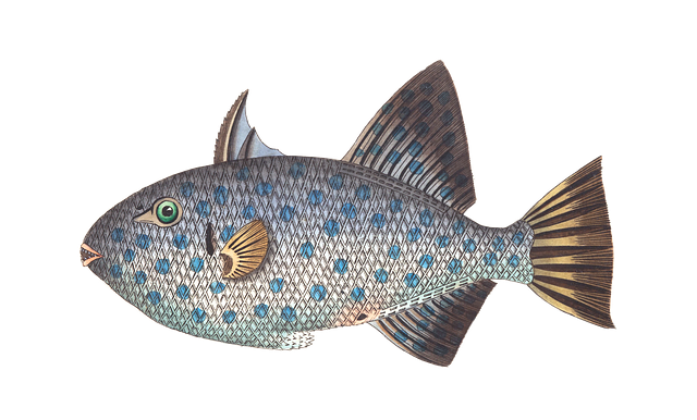 Fish 1525825 640