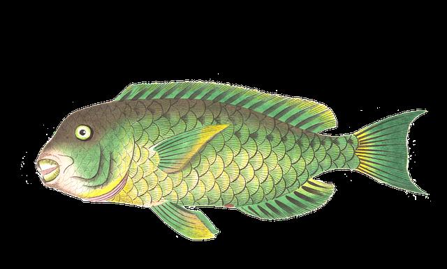 Fish 1525834 640