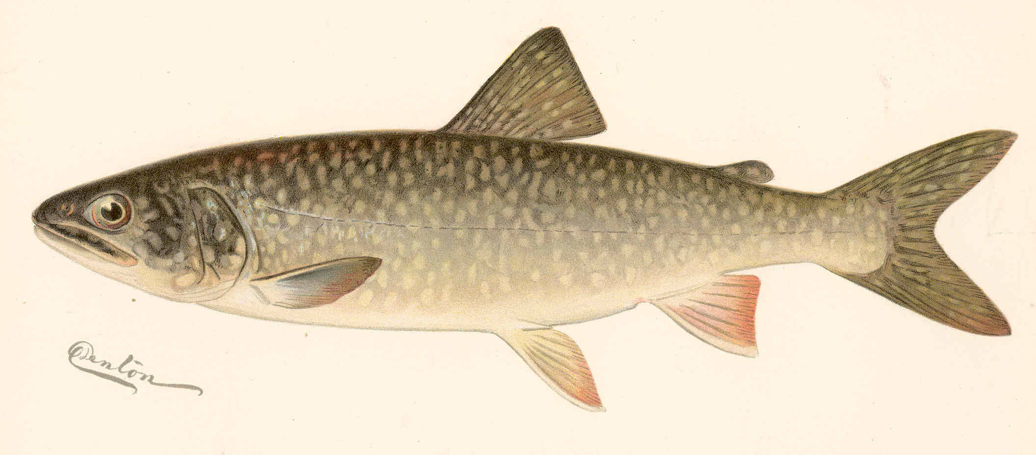 trout lake singles & personals About us  loch levlen trout, lake trout, brook trout, arctic char,  data from water chemistry analyses are available dating back to 1952.