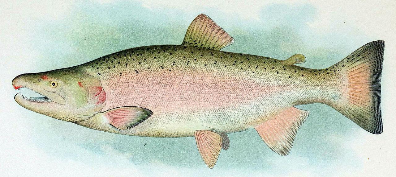 FishSource