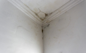 Ceiling Stains Due To A Roof Leak