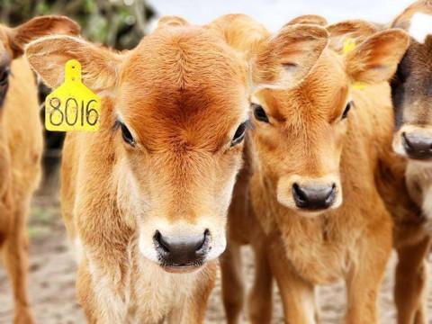 Keeping Your Agritourism Farm Fresh III