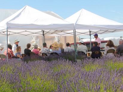 Growing Lavender for the  Home Gardener