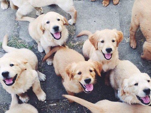 Pints+Puppies - Nashville Event tickets - CitySocial