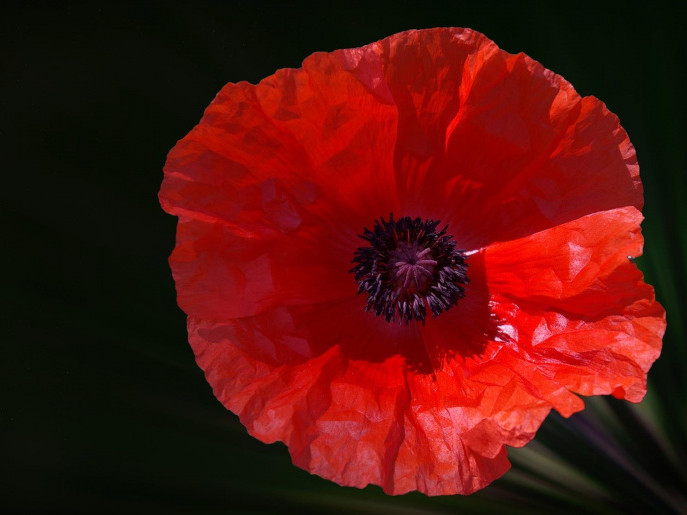 Poppy Day Lunch - Sunday 12th November Event tickets - Moor Hall Hotel and Spa