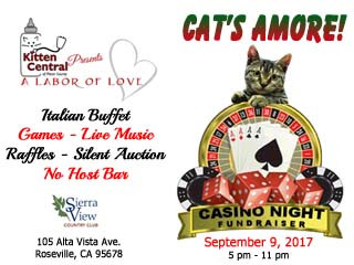 Cats Amore! Event tickets - Kitten Central Presents A Labor of Love