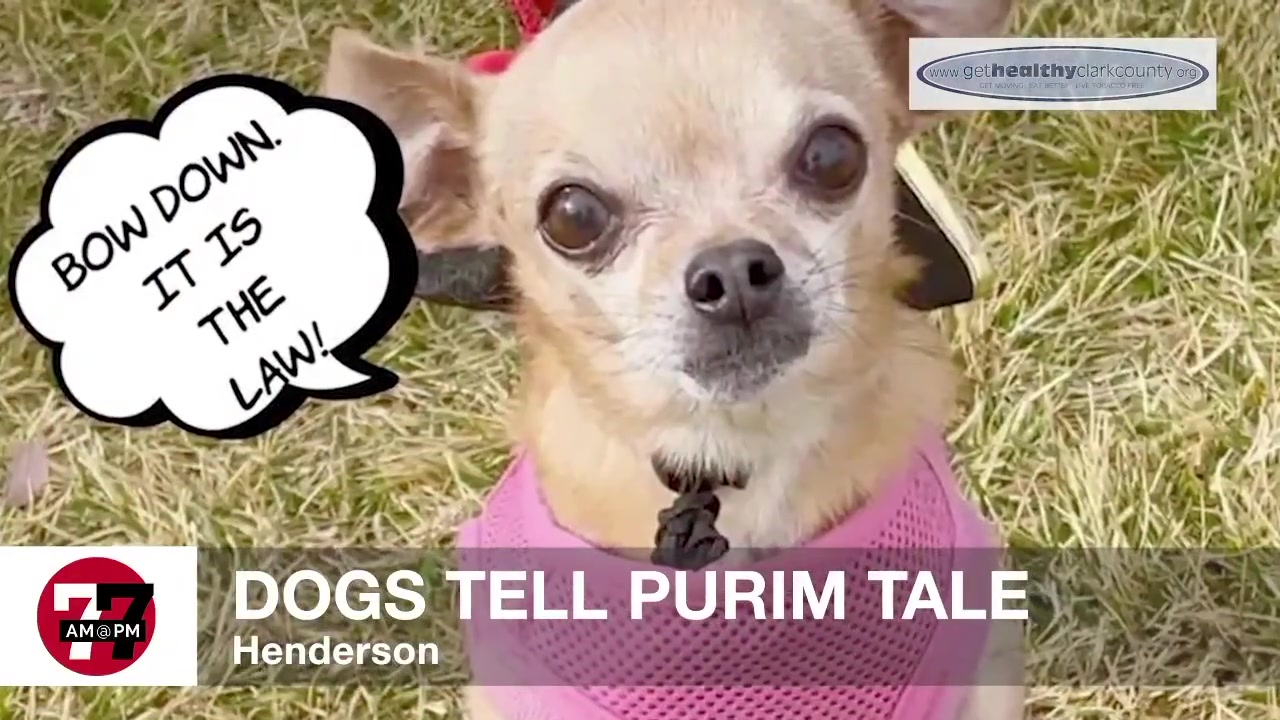 7@7AM Dogs Tell Purim Tale