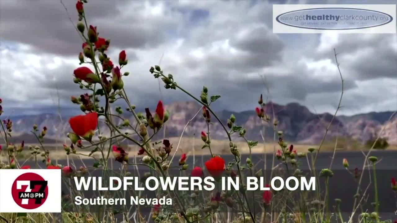 7@7AM Wildflowers In Bloom