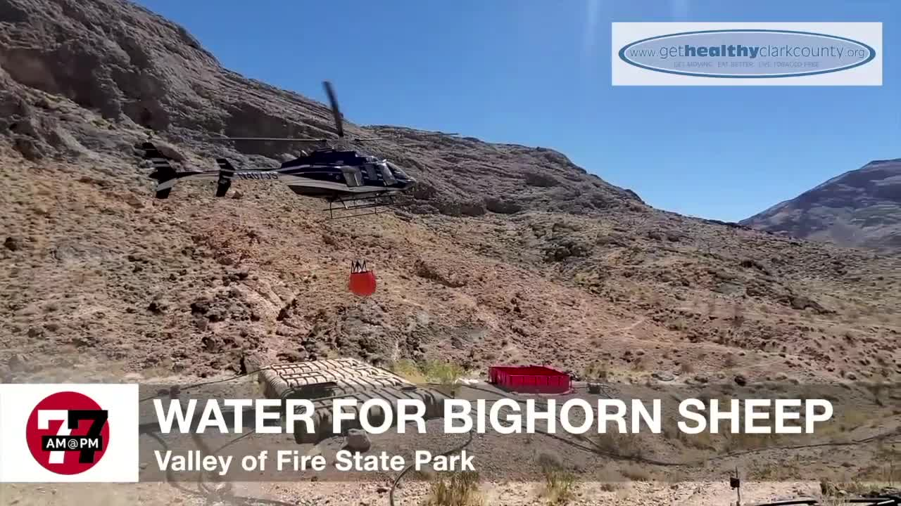 7@7AM Water For Bighorn Sheep