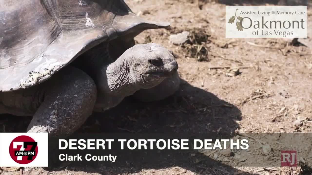 7@7AM Desert Tortoise Deaths