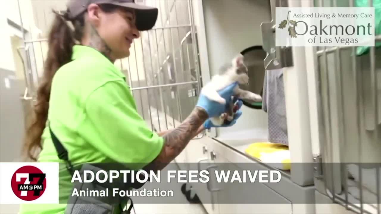 7@7AM Adoption Fees Waived