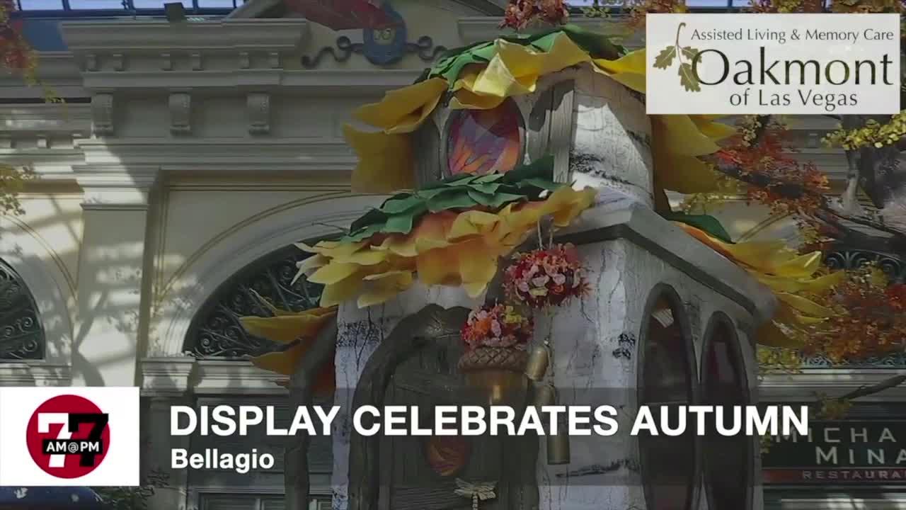 7@7AM Display Celebrates Autumn