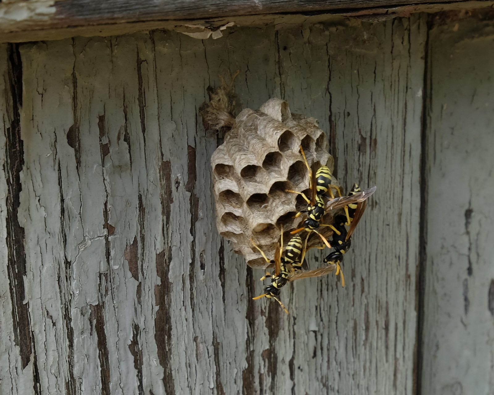 Wasps doing their thing.jpg