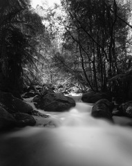 20160807-Taggerty Cascades black and white