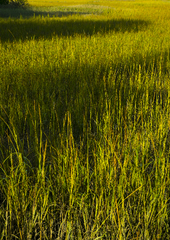 Tybee Island marsh grasses at sunset