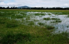 Tarrawarra farm - after the rain
