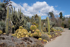 Cactus Garden at the Huntington Library and Gardens in San Marino, California.
