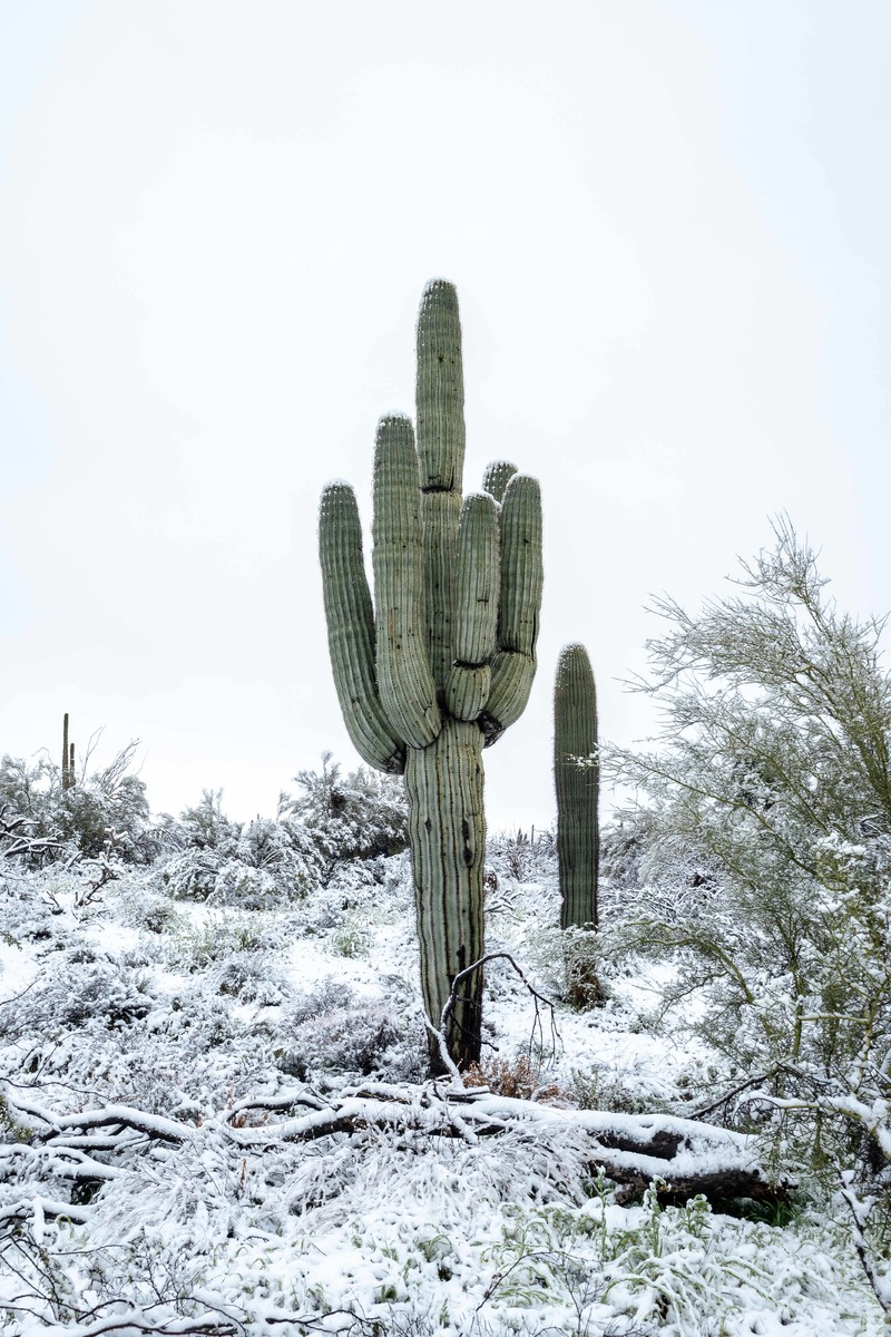Snow covered AZ desert