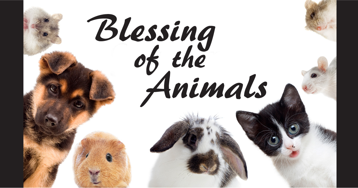 Image result for blessing of the animals
