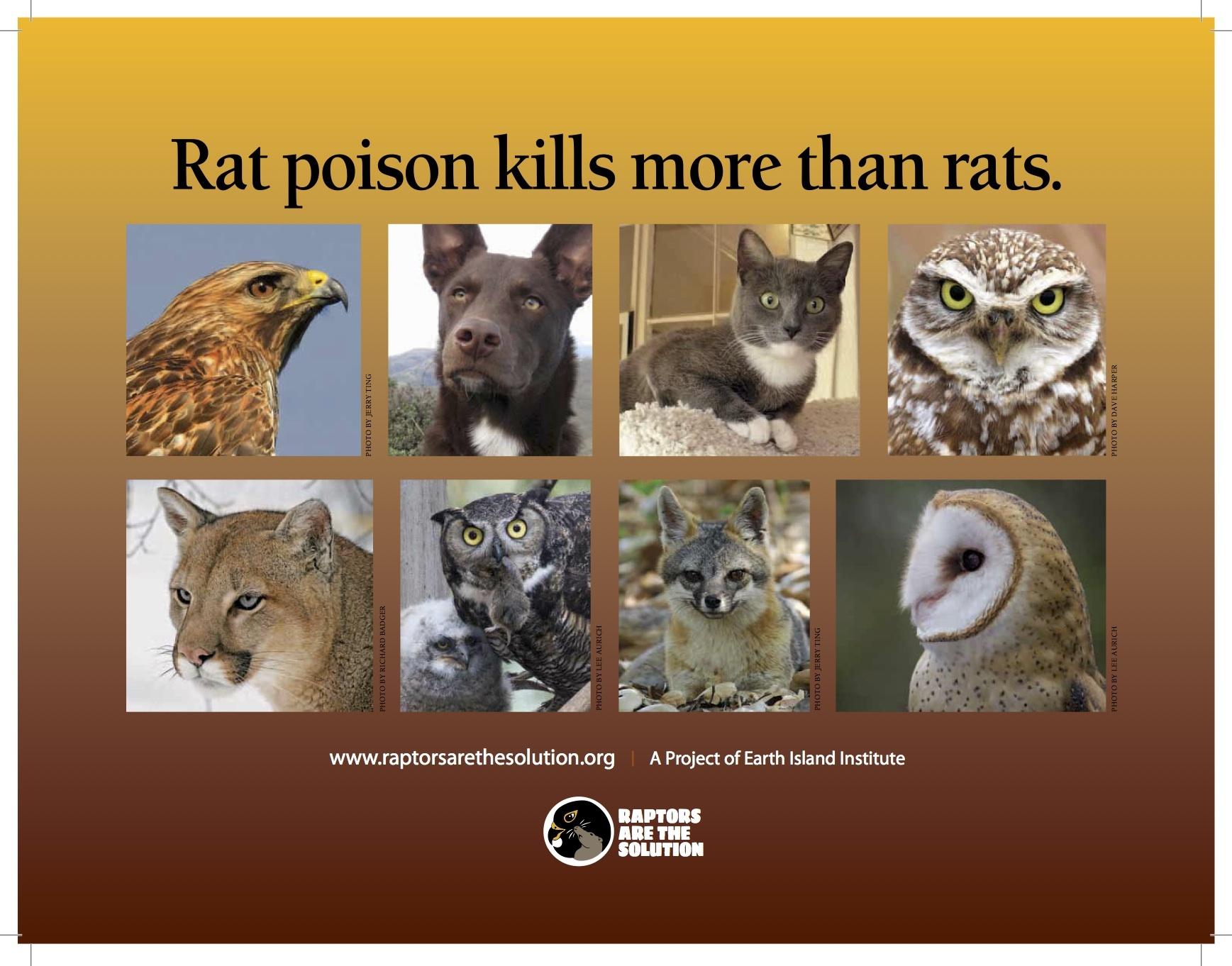Poison for rats - rat poison