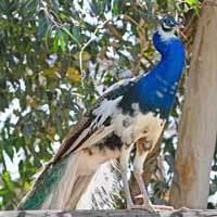 Wildlife-bird-sq