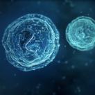 Microbes sq