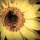 Thumb-flower-bee