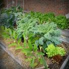 Thumb-garden2