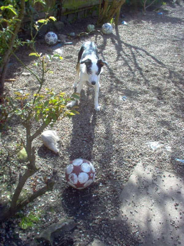 Playtime with footballs...and plenty of them!