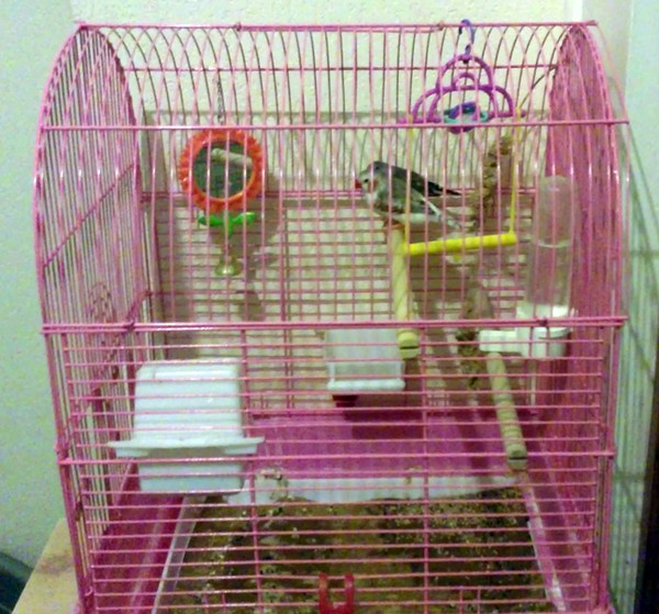 The finches I fostered