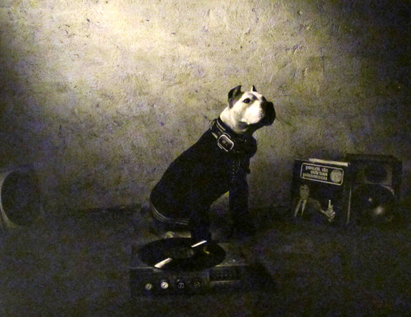 Hajdu Tamas. Dog is a dj. Photography