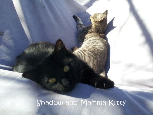 Shadow and Mamma Kitty